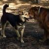 Sergie (13 years)  & Maddie (07-01-07)