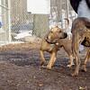 Sampson (puppy), Pepper_00001