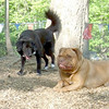 MR Bear & Rocky