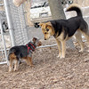 BAILEY (pup, yorkie), Maddie.