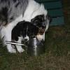 DALLAS (mom) & her pup.