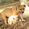Cosmo w  puppy fraser