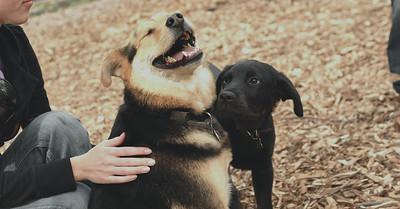 DANTE (puppy, 1st time) w Maddie