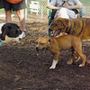 Cosmo (pup), maggie, Cleo_6