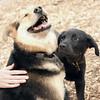 DANTE (puppy, 1st time) w.Maddie