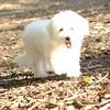 FLUFFY (puppy)