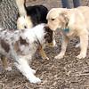 HAZEL (new pup), Maverick (pup)