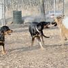 JACKIE (rotweiller pup), Diva, ROBBIE