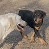 Jackie (pup), Barni