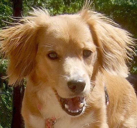 LUNA (cockapoo pup)