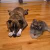Kipper & Lola