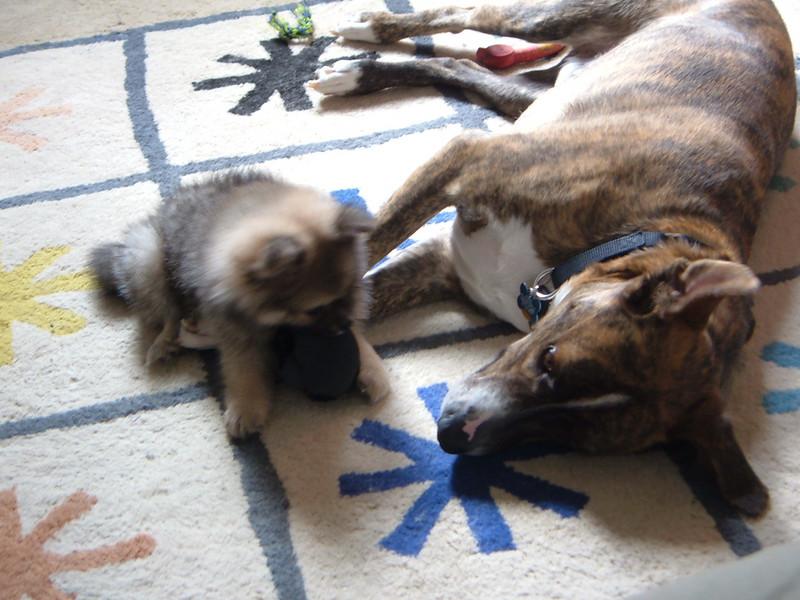 Kipper & Lola 2