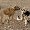 maggie (pup), Maddie