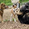MAGGIE (pup), Tayda, maddie, oliver
