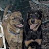 Maggie, Jackie (puppies)