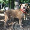 ALICE (pitbull pup) (06/23/07), MADDIE