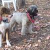 BAXTER (4 months) & KOBE (1yr) (10/06/07) (housemates)