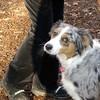 DALLAS & BOBBY (dallas pup)