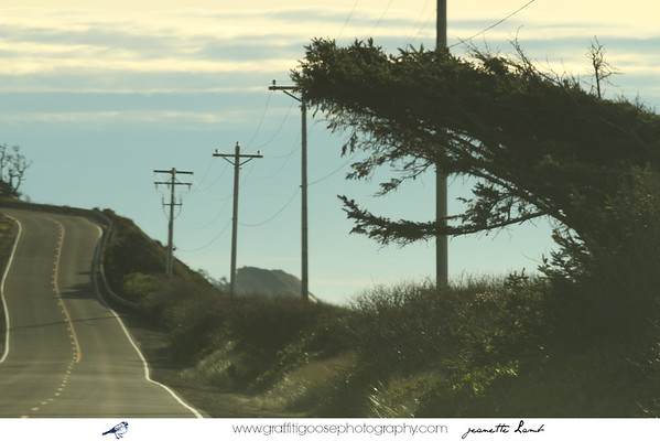Pacific Coast Highway, USA