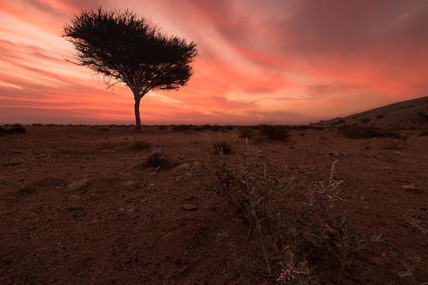Mleiha sunrise