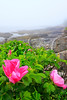 ME BAR HARBOR BAR HARBOR SHORE PATH MOUNT DESERT ISLAND JUNEAG_MG_0785bMMW