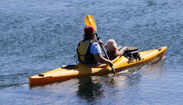 dog riding in kayak sitting like a person, poodle wearing a life jacket