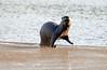 Otter Step
