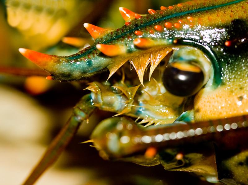 Lobster Eye