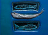 fish on fish, fry on tile, blue decorative with live fish, Phippsburg, Maine