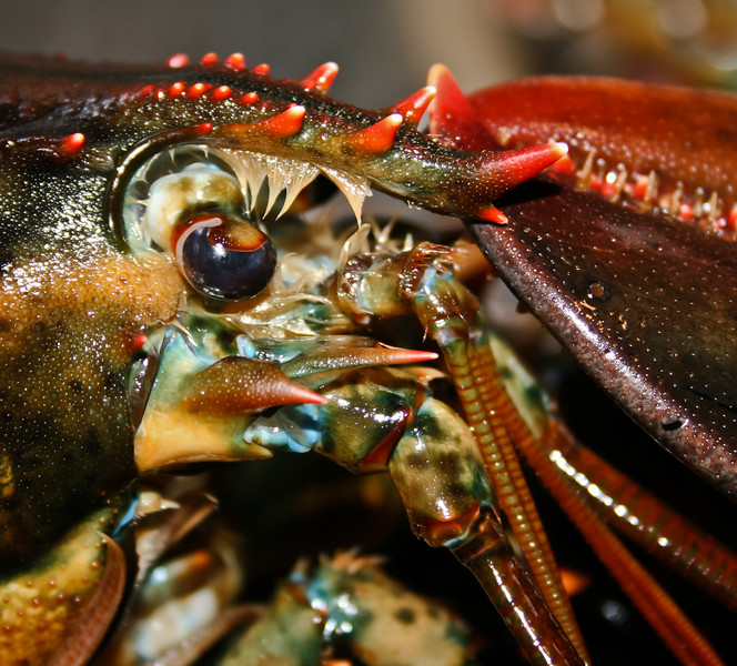 Lobster Face, Maine