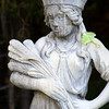 Luna Moth On Statue , Maine butterfly