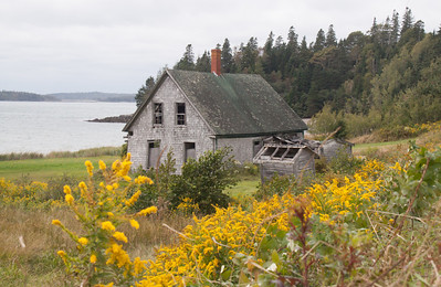 Abandoned house in field of Goldenrod, Deer Island, New Brunswick Canada