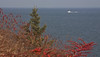 Maine scenic panorama, from Owl's Head, Maine looking north in autumn, lobster boat coming in