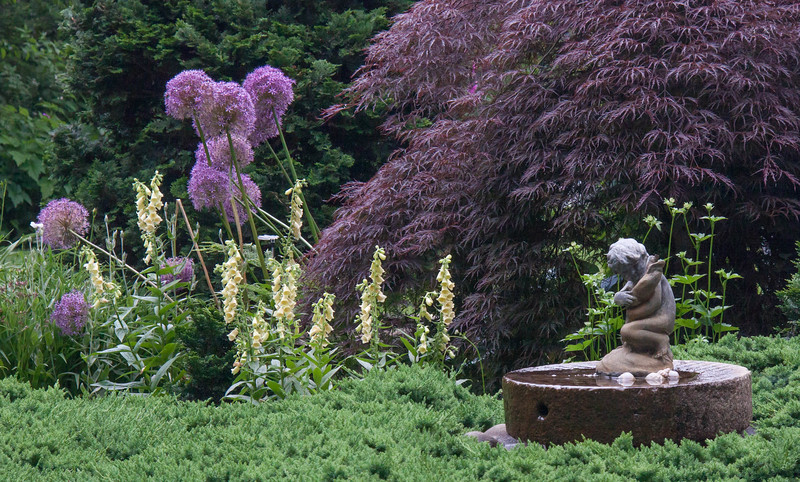My coastal Maine garden in late June - garden fountain of child clutching fish, junipers, Japanese maple, allium and foxgloves