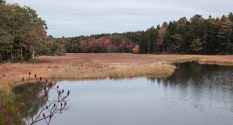Small Point Harbor Marsh, north of Falls Bridge, Phippsburg Maine, October scenic imagery