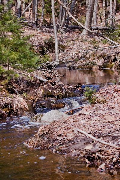Morse Creek Freshet