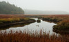 Dromore Bay, salt marsh in fall, Phippsburg, Maine, wildlife habitat