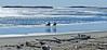Popham Beach, The Herons, winter, horse back riding, Phippsburg, Maine