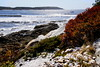 Hermit Island, Phippsburg, Small Point Harbor Maine. Pile of Hen clam shells (a type of Quahog) in the foreground with red Huckleberry foliage