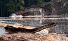 driftwood, Sprague River salt marsh, Phippsburg Maine
