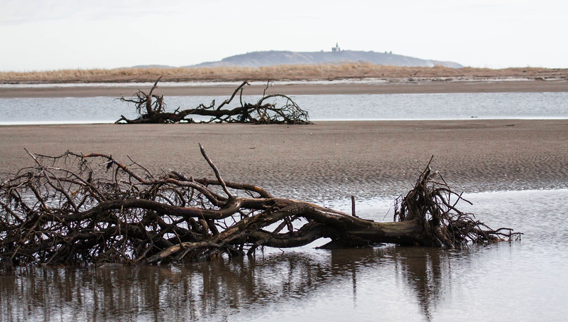 driftwood with Seguin Island Lighthouse, Popham Beach State Park, winter, Phippsburg Maine
