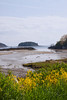 Looking east from Round Cove Road, Sebasco Estates, Phippsburg Maine to Burnt Coat Island Island with wild mustard in the foreground, May