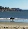 Seguin Island, Popham Beach, Phippsburg, Maine horseback riding