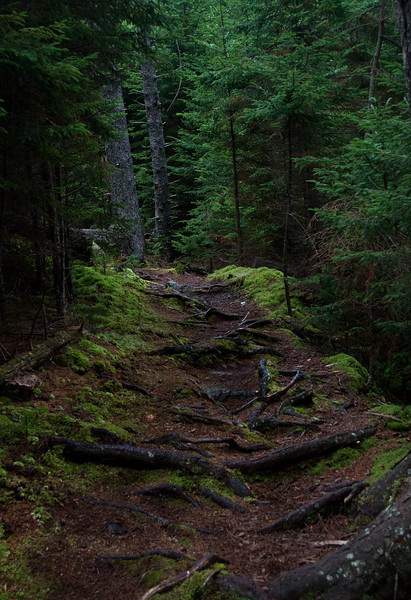 Red Ribbon Trail Monhegan  a lovely, peaceful path through mature spruce forest, cool, dark, mysterious