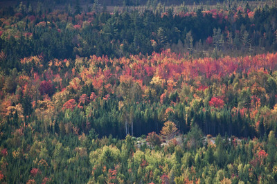 Aerial view of fall foliage, looking south while flying over Moosehead Lake, Maine