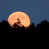 November, Hunter's Moon rising over tree tops across Totman Cove, PHippsburg, Maine