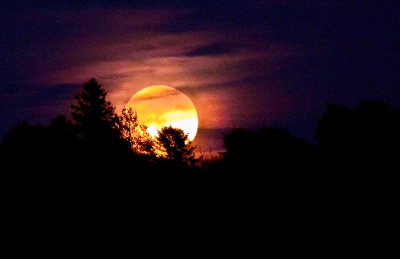 February full moon, called The Full Hunger Moon rising over tree line, Phippsburg Maine