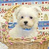 X Sold to Tifany W. , Grapevine Tx.+ PUPPY NUMBER ( # MTOY 605 -2005 )<br /> Breed: Maltese<br /> Sex: Male<br /> Size:  Toy<br /> D.O.B. 4-2-2005<br /> Color: White<br /> Sold for  $ 575.00 with coupon code listed on our web site.<br /> Personality: Sweet, Sweet, Sweet!!!!<br /> COMMENTS: Will be approximately 5 to 9 pounds full grown<br /> SUMMER SPECIAL PRICES + COUPON CODES ACCEPTED ON THIS PUPPY ++