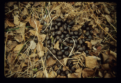 Moose droppings marbles BWW-127-SS