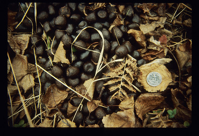Moose droppings marbles BWW-122-SS